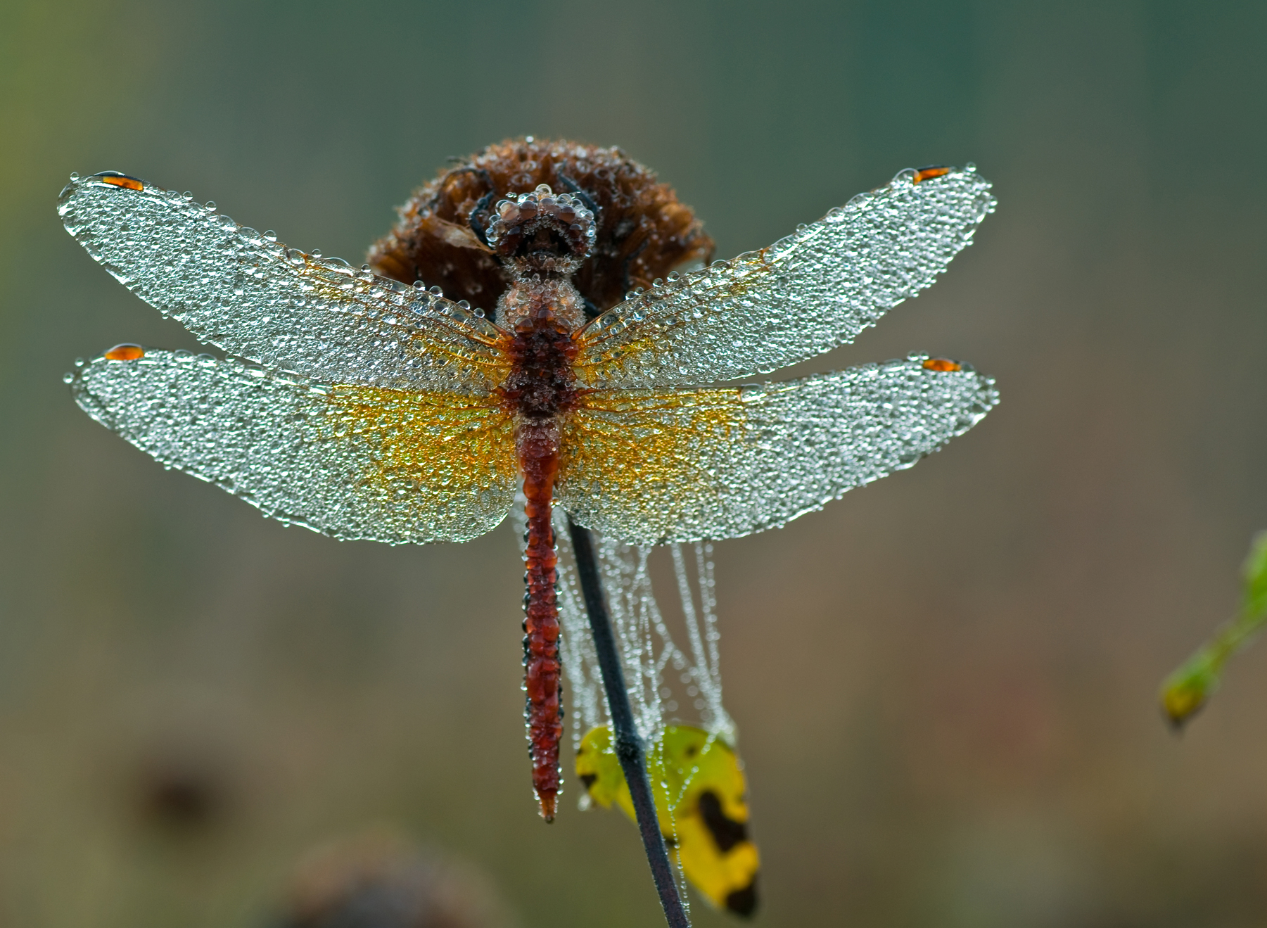 Late Fall Wallpaper Nature Dragonfly Wings Rick Stockwell Photography