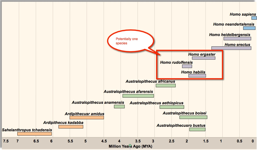 Timeline Of Human Evolution Science Daily.html | Autos Post