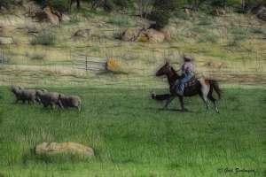 sheepdog-trials-frac-web