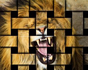roaring-lion-weave.jpg