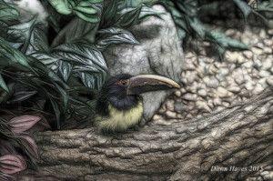 birdbeakweb-300x199.jpg