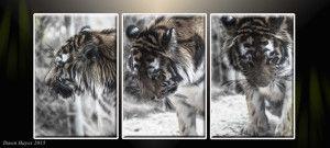 tiger-triple-panelweb-300x135.jpg
