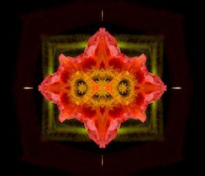 Poppies--b2.jpg