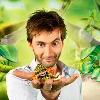 CBeebies -Tree Fu Tom (raising awareness of dyspraxia)