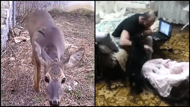 Baby Mobile Deer Chooses Owner & Cat Defends Baby | Rtm - Rightthisminute