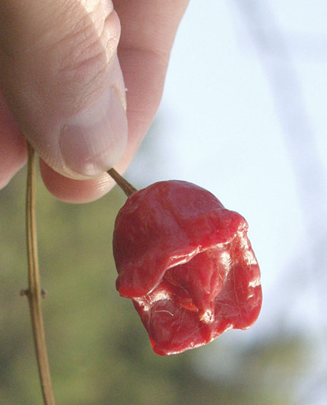 cv chile