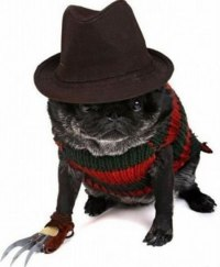 9 Dogs Dressed Like Freddy Krueger