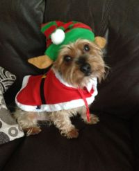 Here Are Some Photos Of Pets Wearing Christmas Costumes ...