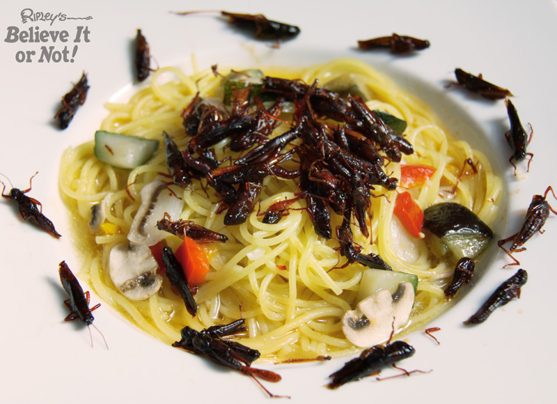 Bugs In Pasta Insect Pasta - Ripley Publishing