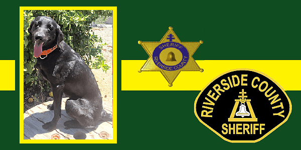 Riverside County Sheriff's K9 fatally struck by car during investigation