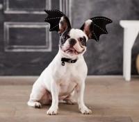 Bat Pet Costume   Pottery Barn Kids