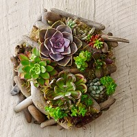 Succulent Driftwood Wall Art | Williams Sonoma