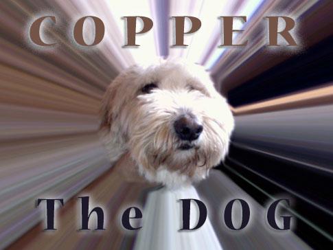 copperthedog