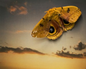 Sleight of Hand (Moth on Polaroid Sky)