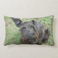 Black Schnauzer Pillow | Zazzle