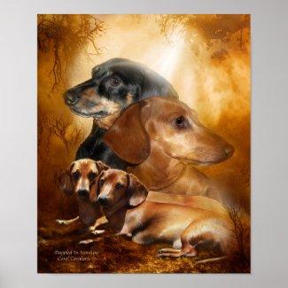 Doxies - Dappled In Sunshine Art Poster/Print