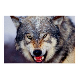 Fearsome Wolf Poster