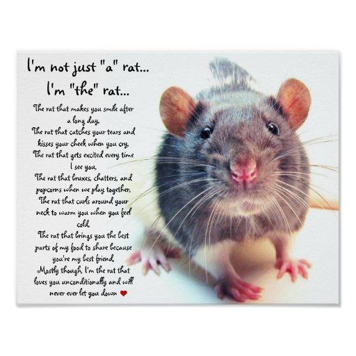 A List of Safe and Dangerous Foods for Your Pet Rat Dried - pet poster