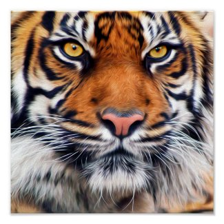 Male Siberian Tiger Posters