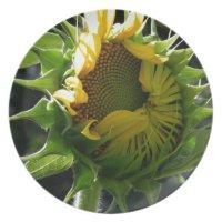 Peeking Sunflower Dinner Plate | Zazzle
