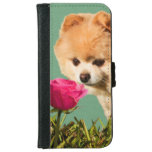 Pomeranian Dog and Rose