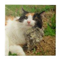 Puma's Hard Pillow Calico Kitty Tile | Zazzle