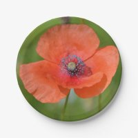Red Poppy Paper Plate 7 Inch Paper Plate | Zazzle