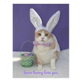 Some bunny loves you. post cards
