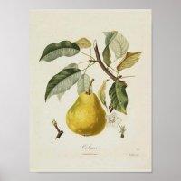 Vintage Pear Poster | Zazzle