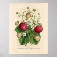 Vintage Strawberries Poster | Zazzle