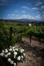 leoness-winery-vineyard-wedding-1264-photography-03