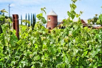 leoness-winery-vineyard-wedding-1264-photography-04