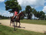 Dani the Horse