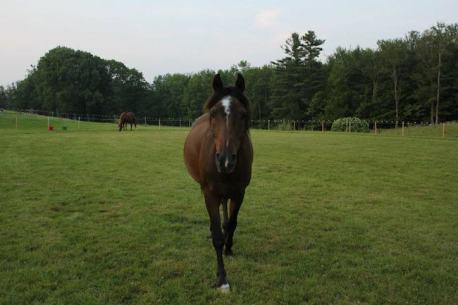 Gandalf the Horse