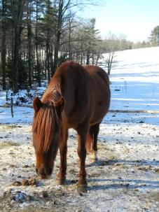 Ramona the Horse