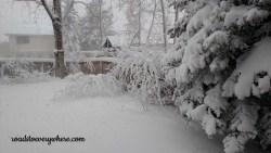 blizzard03