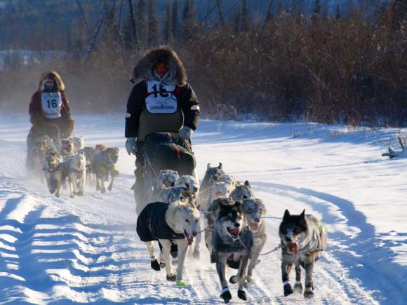 Yukon-Quest-two-mushers