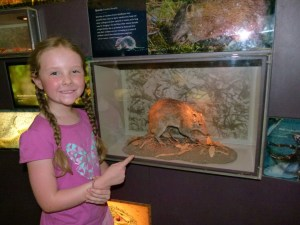 Kady showcasing one of the displays in the Visitor Information Centre.