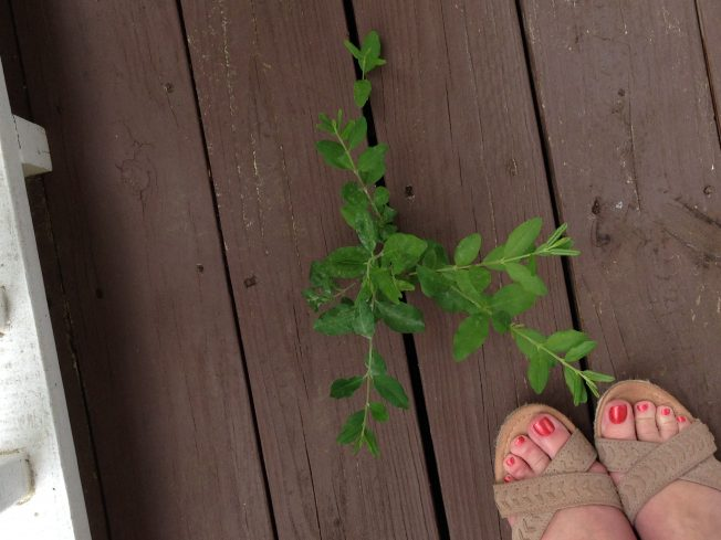 weed-growing-through-deck