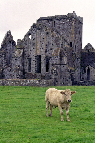 Ruins of Hore Abbey near the Rock of Cashel