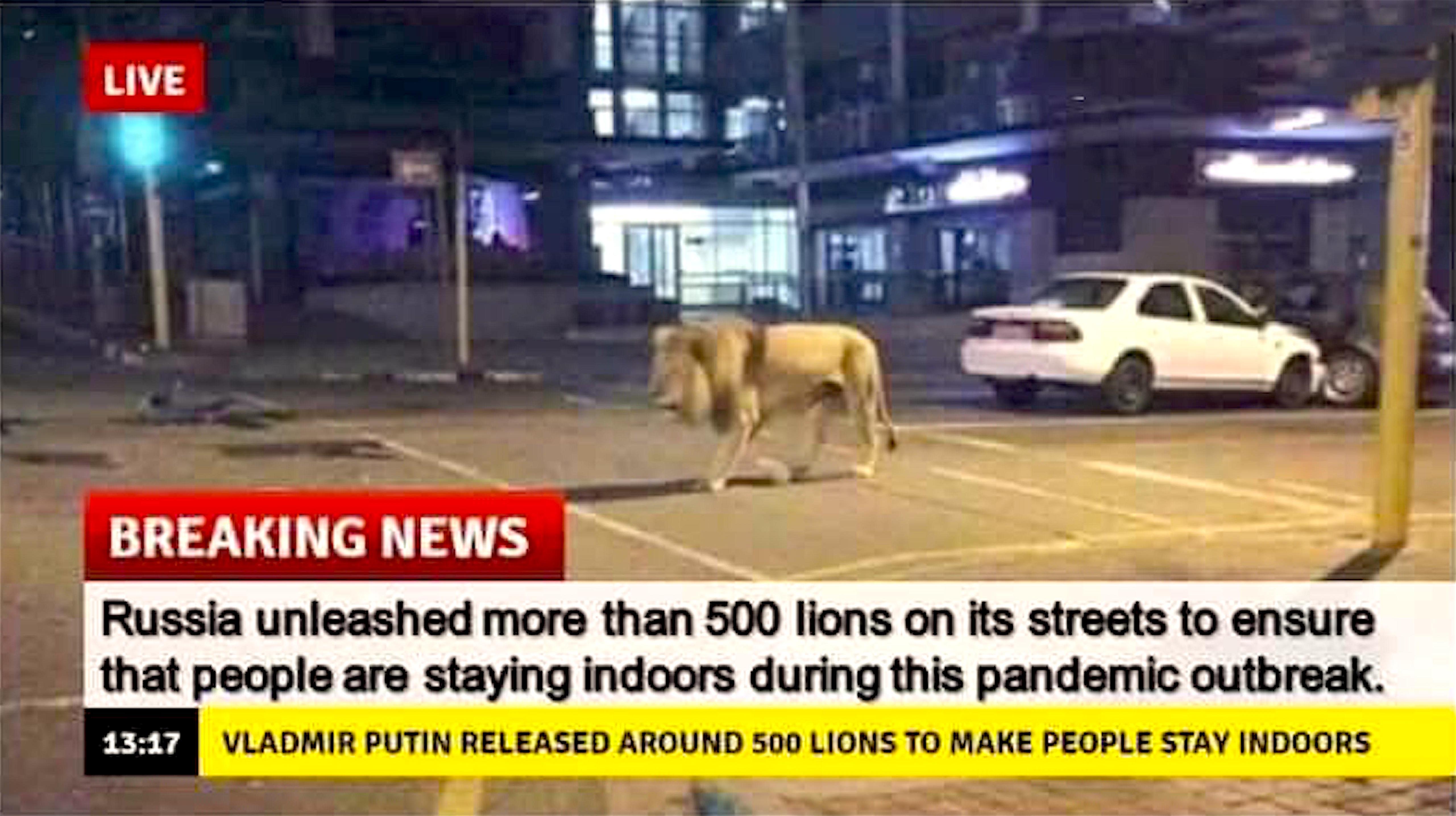 Vladimir Putin released around 500 lions to make people stay indoors (foto Twitter)