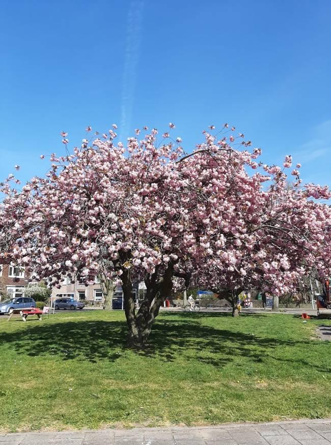 Een boompje bloemen (foto Yolanda Jonker)