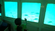 The kids could see all the ocean creatures while staying dry