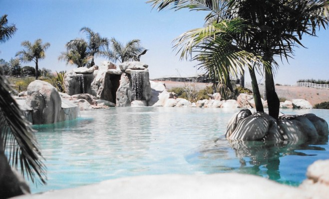 swimming pools fish ponds (4)