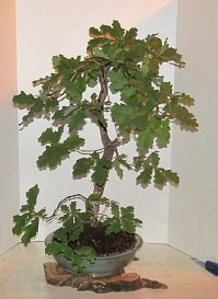 Oak 2016