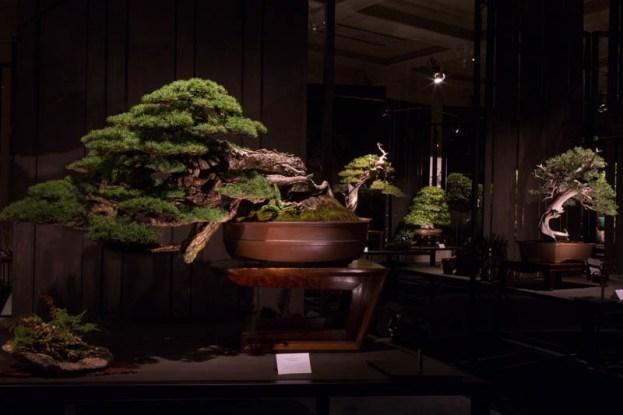 Impressive bonsai