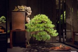 Courtesy of Jonas Dupuich - Southwestern white pine