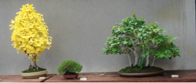 Courtesy of Bonsai Center Sopelana