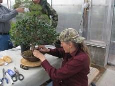 Terril working her Ficus