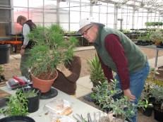 Darrel Jap Black Pine consultation
